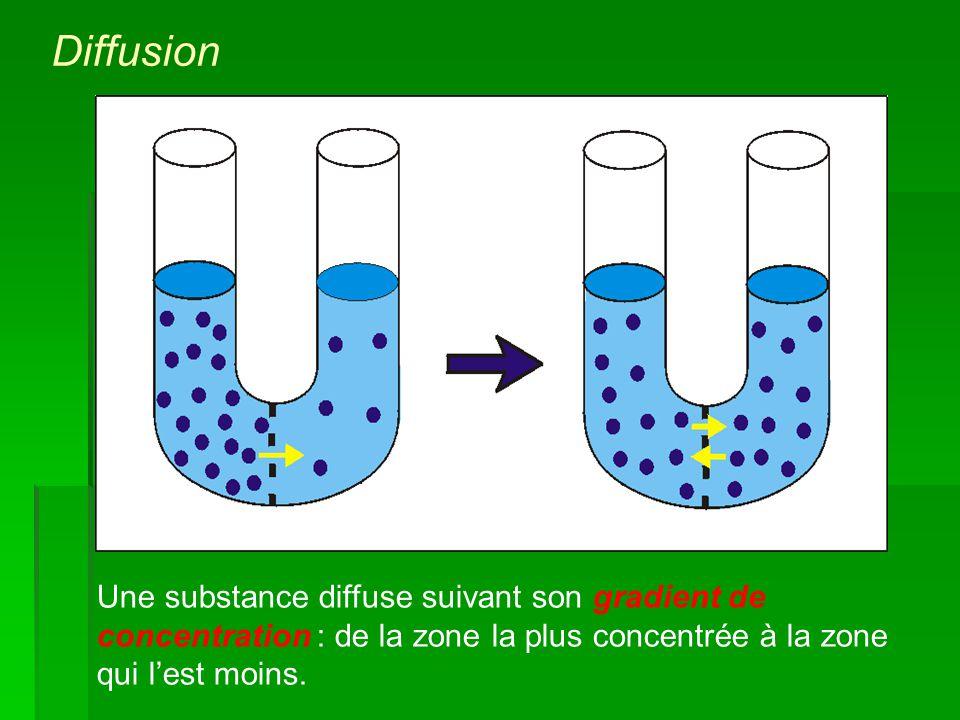 Diffusion Une substance diffuse suivant son gradient de concentration : de la zone la plus concentrée à la zone qui l'est moins.