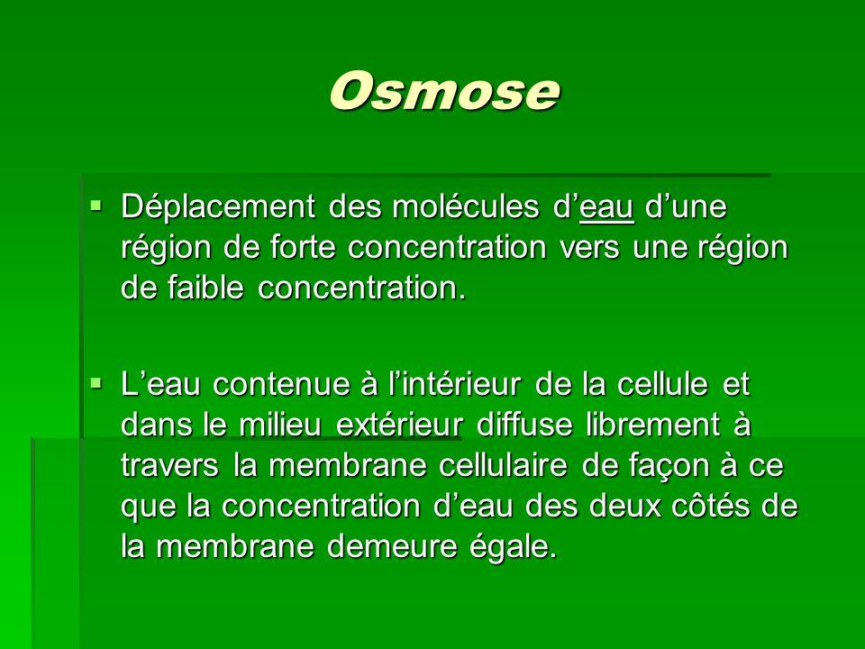 Osmose Déplacement des molécules d'eau d'une région de forte concentration vers une région de faible concentration.
