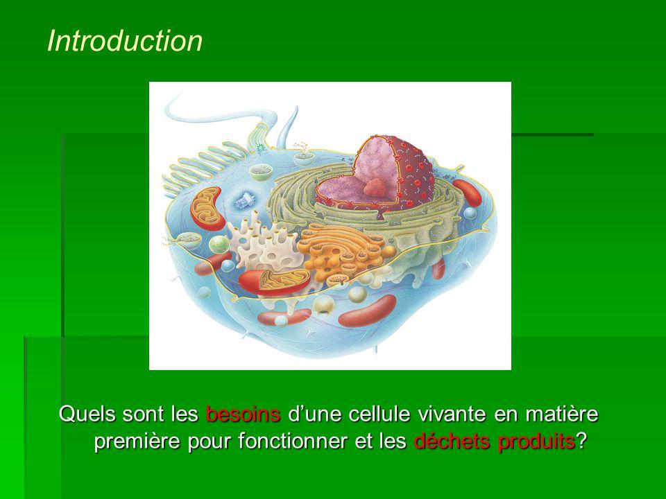 Introduction Quels sont les besoins d'une cellule vivante en matière première pour fonctionner et les déchets produits