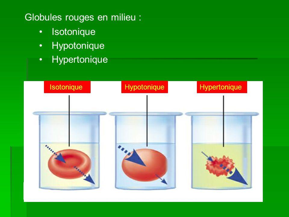 Globules rouges en milieu : Isotonique Hypotonique Hypertonique