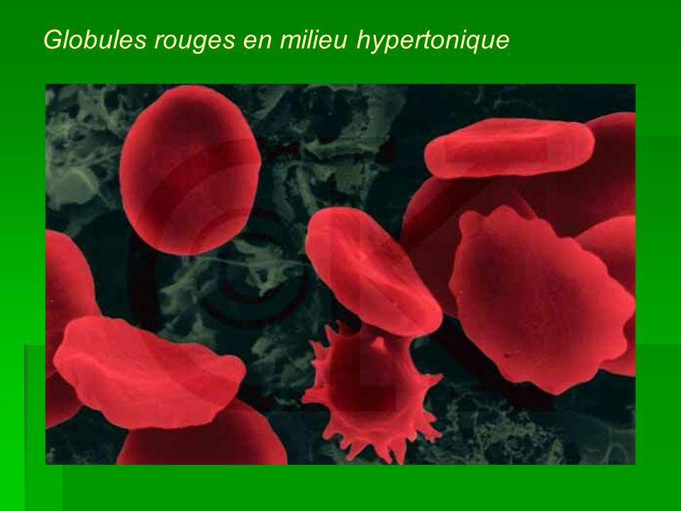 Globules rouges en milieu hypertonique