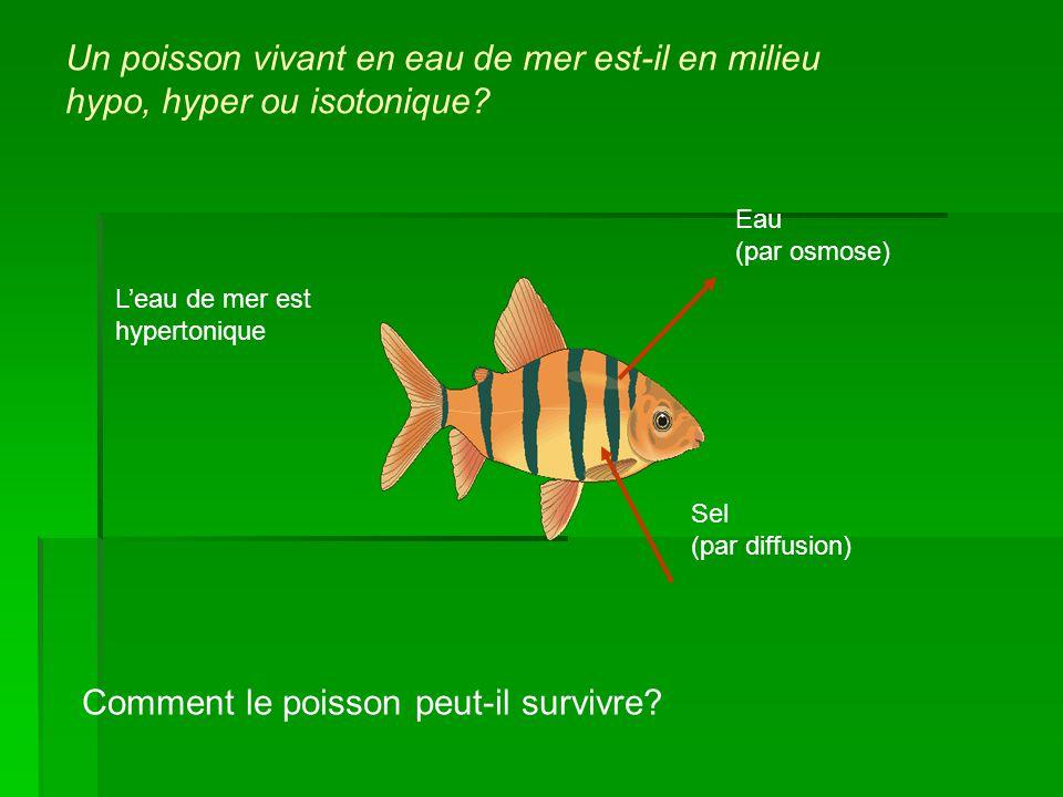 Comment le poisson peut-il survivre
