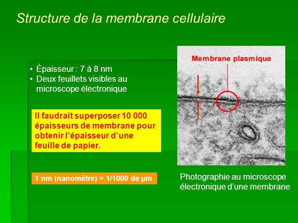 Structure de la membrane cellulaire