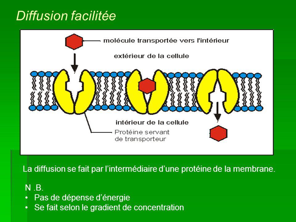 Diffusion facilitée La diffusion se fait par l'intermédiaire d'une protéine de la membrane. N .B. Pas de dépense d'énergie.