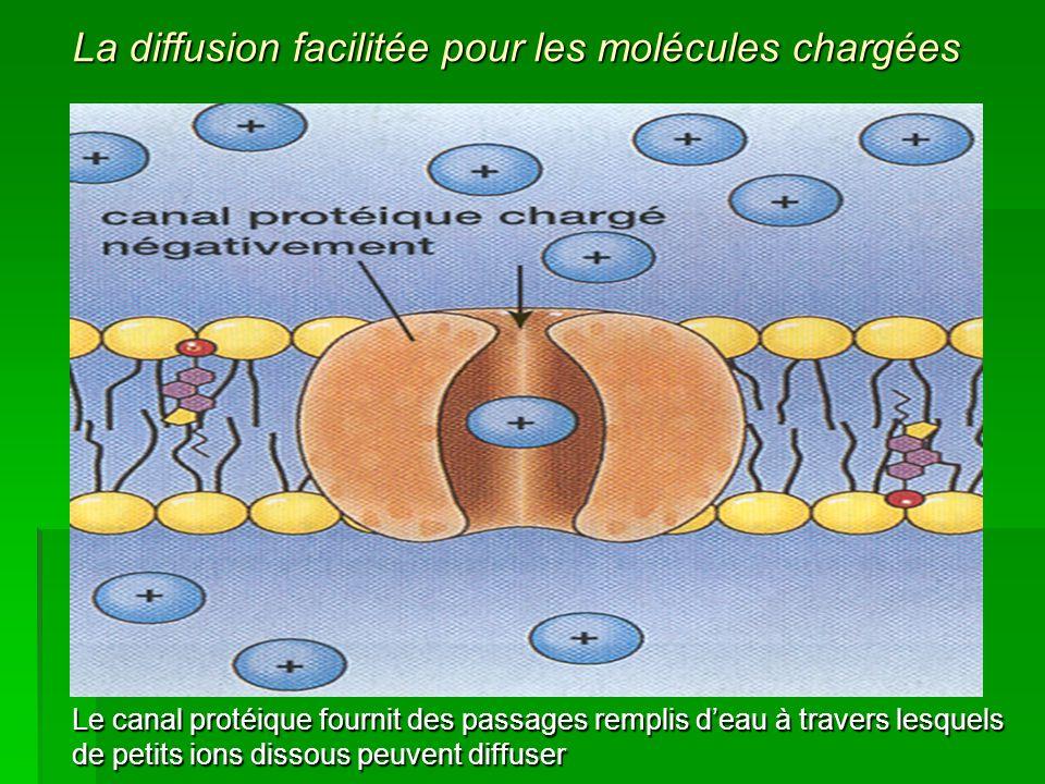 La diffusion facilitée pour les molécules chargées