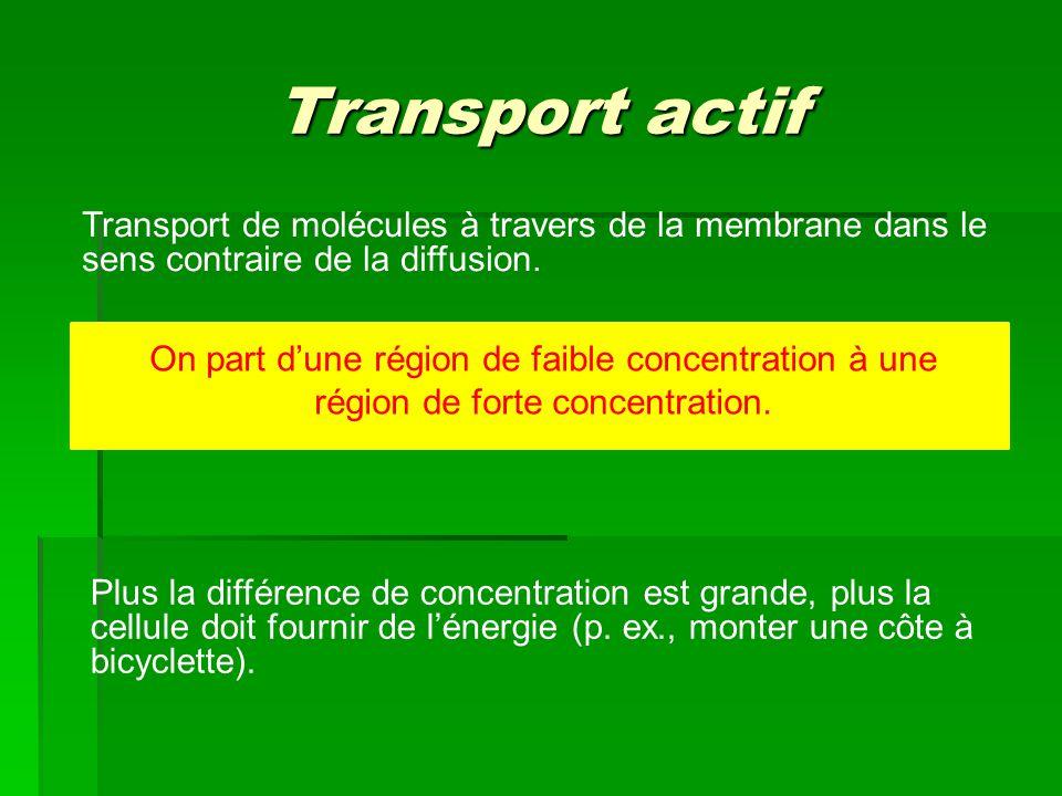 Transport actif Transport de molécules à travers de la membrane dans le sens contraire de la diffusion.