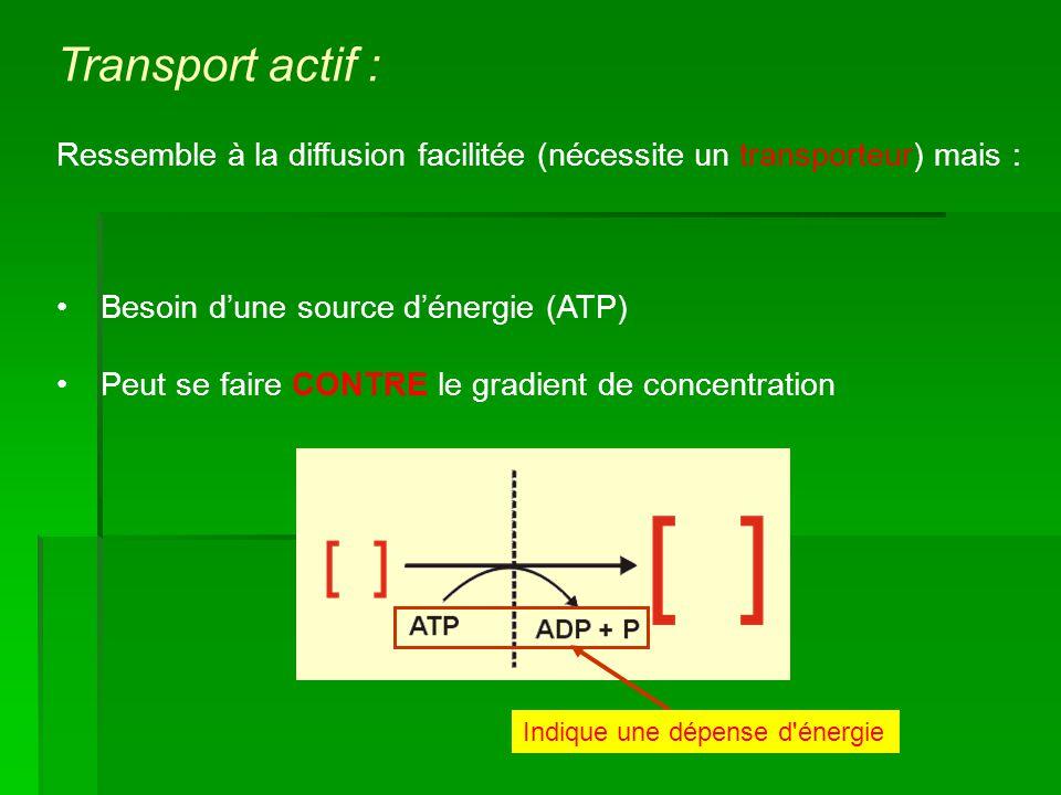 Transport actif : Ressemble à la diffusion facilitée (nécessite un transporteur) mais : Besoin d'une source d'énergie (ATP)