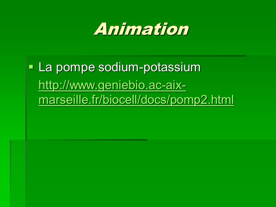 Animation La pompe sodium-potassium