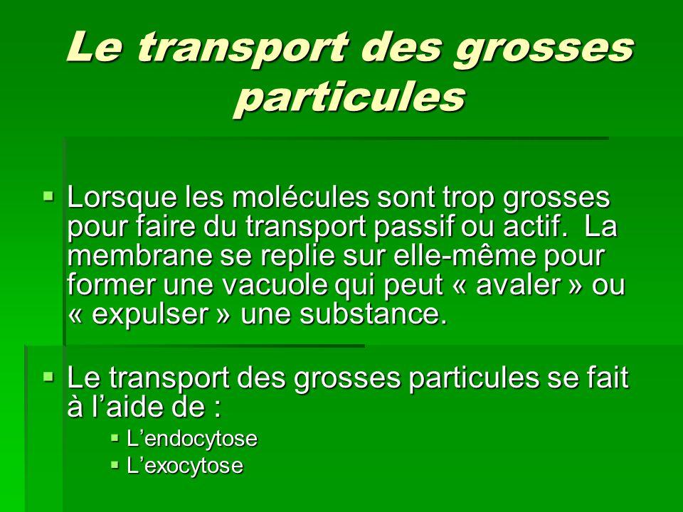 Le transport des grosses particules