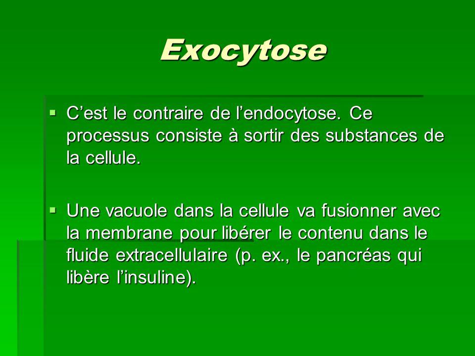 Exocytose C'est le contraire de l'endocytose. Ce processus consiste à sortir des substances de la cellule.