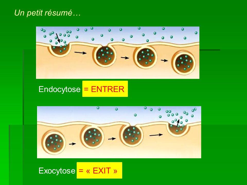 Un petit résumé… Endocytose = ENTRER Exocytose = « EXIT »