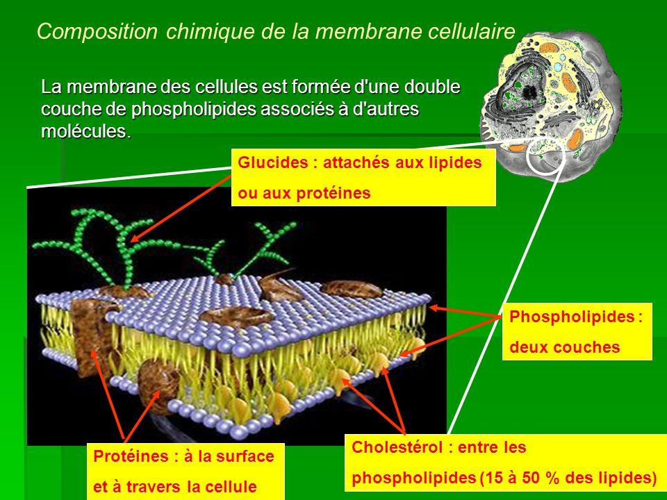 Composition chimique de la membrane cellulaire