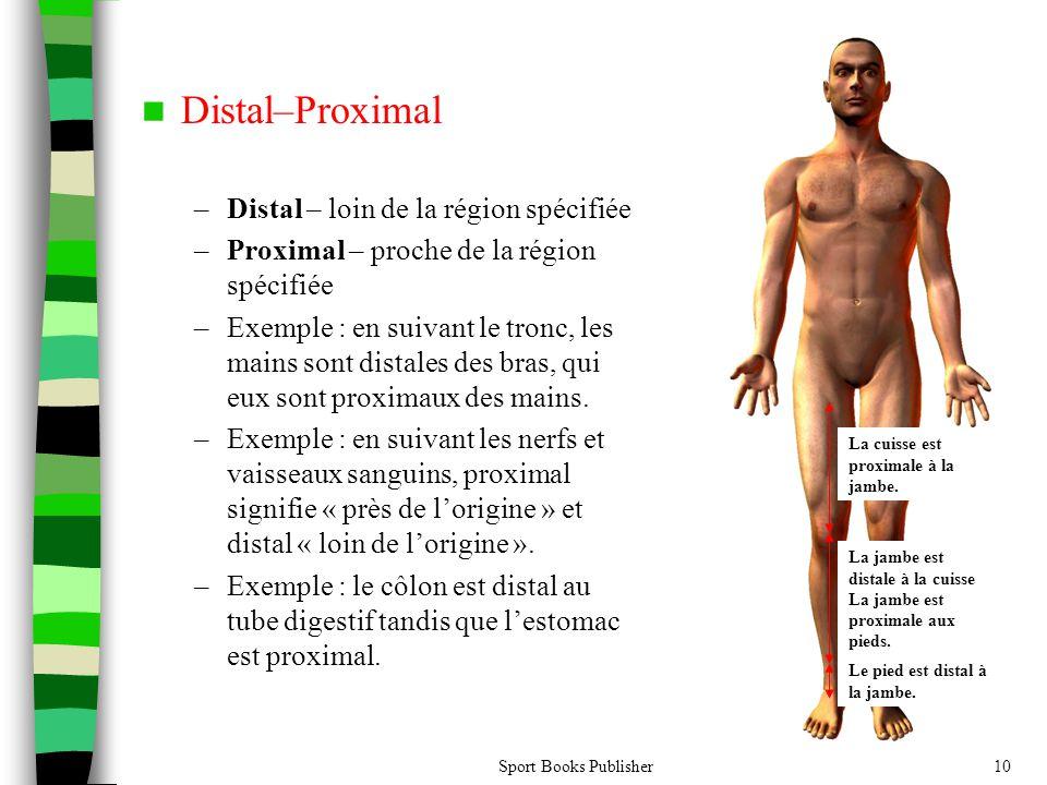 Distal–Proximal Distal – loin de la région spécifiée