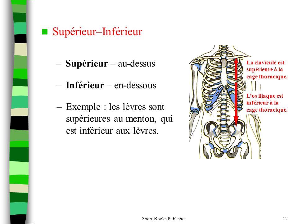 Supérieur–Inférieur Supérieur – au-dessus Inférieur – en-dessous
