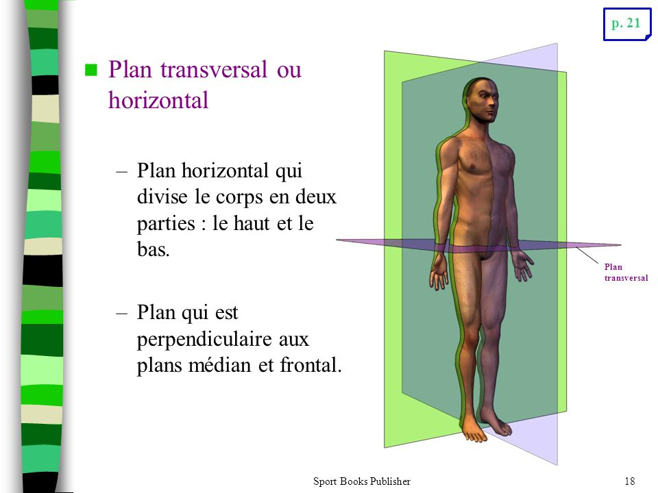 Plan transversal ou horizontal