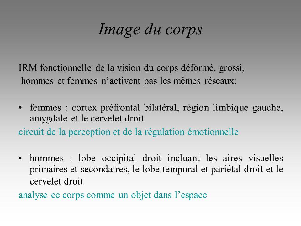 Image du corps IRM fonctionnelle de la vision du corps déformé, grossi, hommes et femmes n'activent pas les mêmes réseaux: