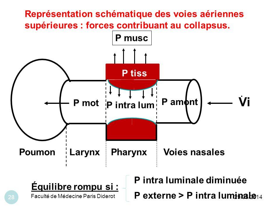 Représentation schématique des voies aériennes supérieures : forces contribuant au collapsus.