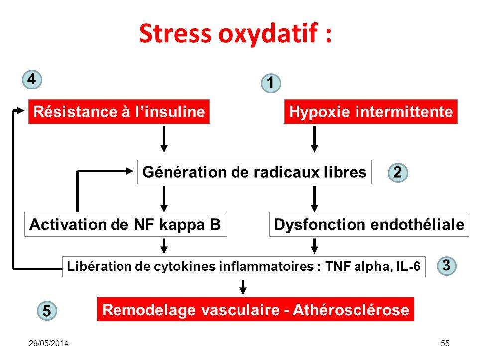 Stress oxydatif : 5 Résistance à l'insuline Hypoxie intermittente