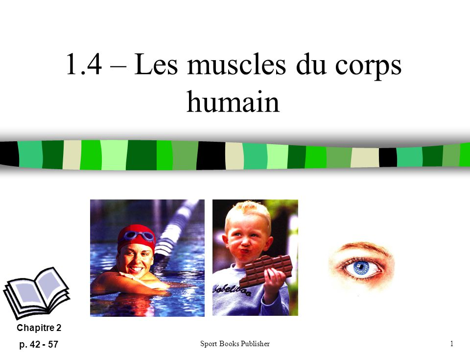 1.4 – Les muscles du corps humain