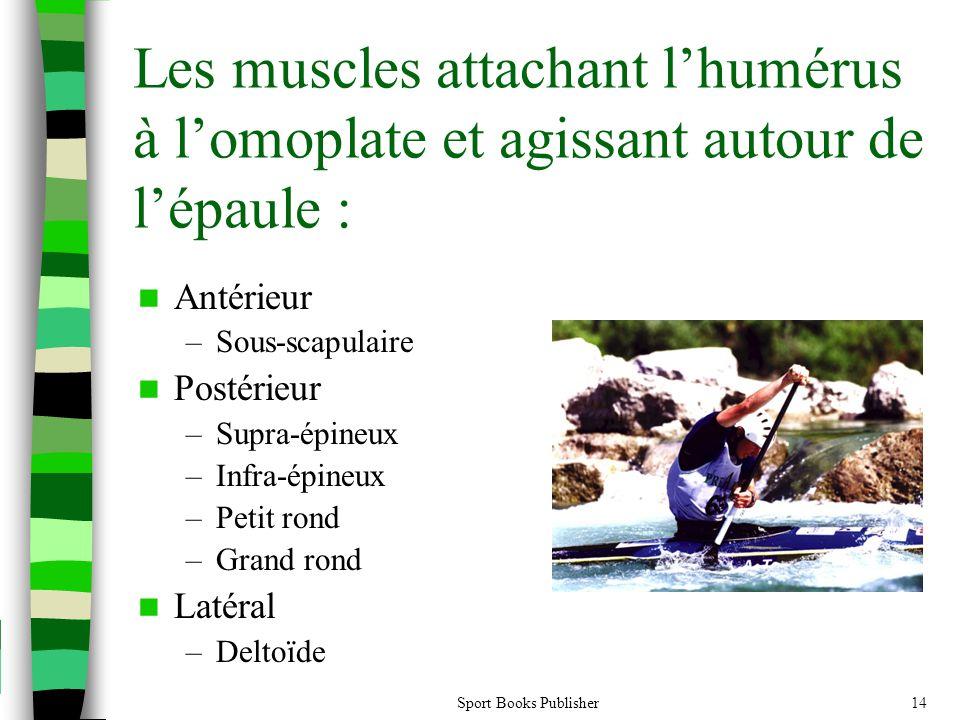 Les muscles attachant l'humérus à l'omoplate et agissant autour de l'épaule :