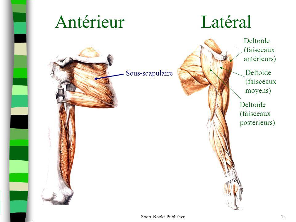 Antérieur Latéral Deltoïde (faisceaux antérieurs) Sous-scapulaire
