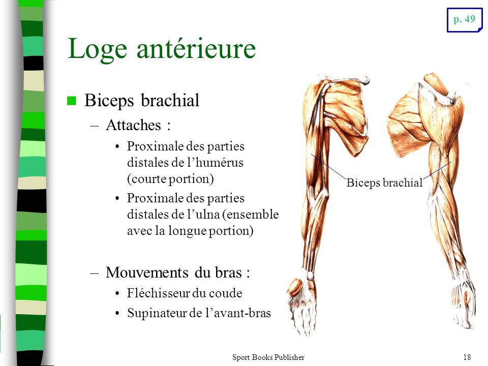Loge antérieure Biceps brachial Attaches : Mouvements du bras :