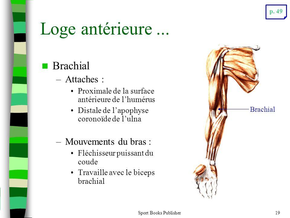 Loge antérieure ... Brachial Attaches : Mouvements du bras :