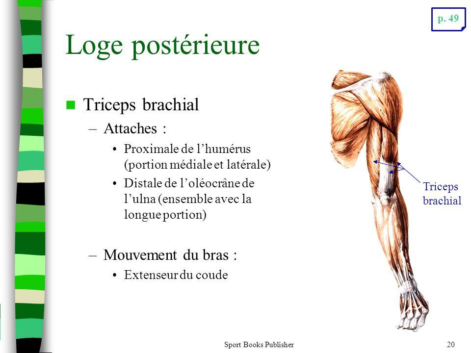 Loge postérieure Triceps brachial Attaches : Mouvement du bras :
