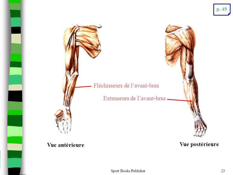 Fléchisseurs de l'avant-bras