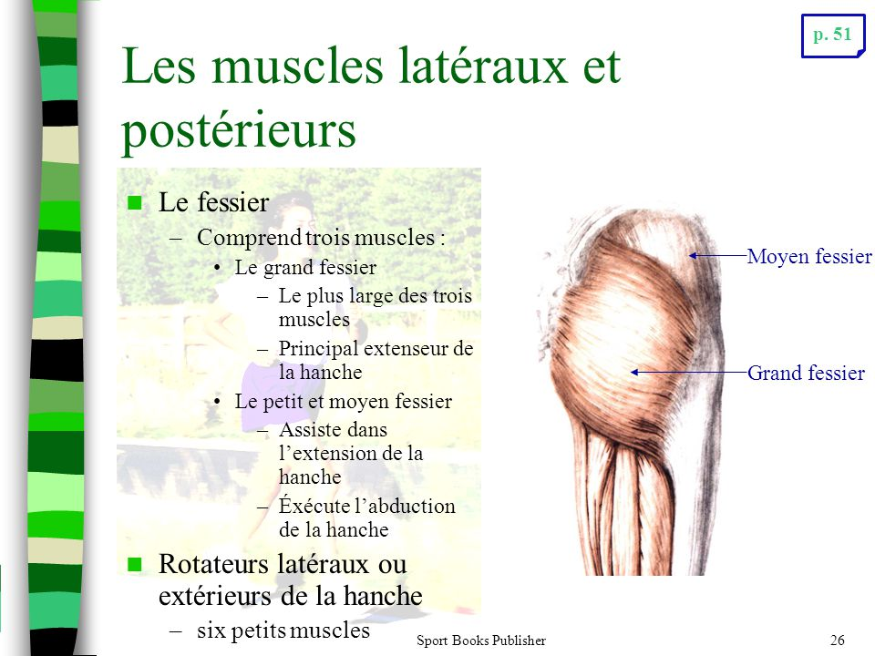 Les muscles latéraux et postérieurs
