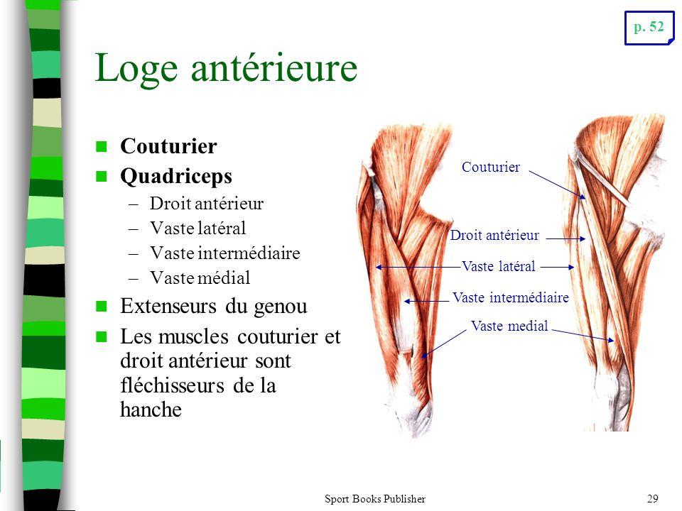 Loge antérieure Couturier Quadriceps Extenseurs du genou
