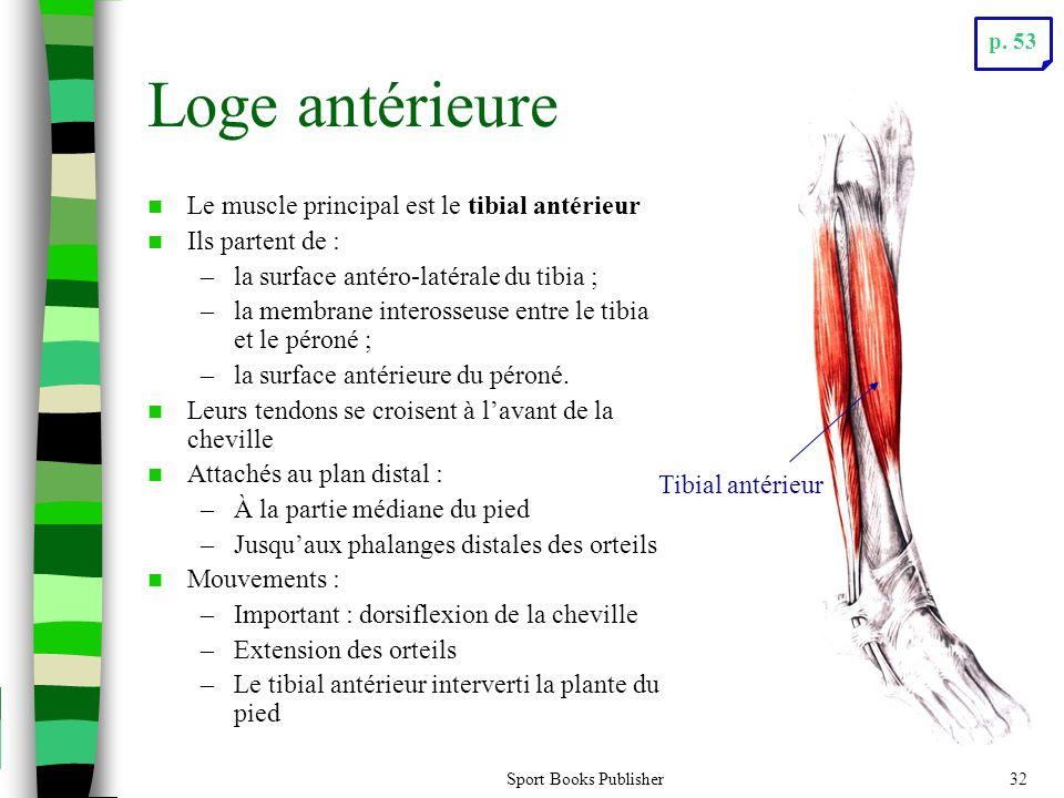 Loge antérieure Le muscle principal est le tibial antérieur