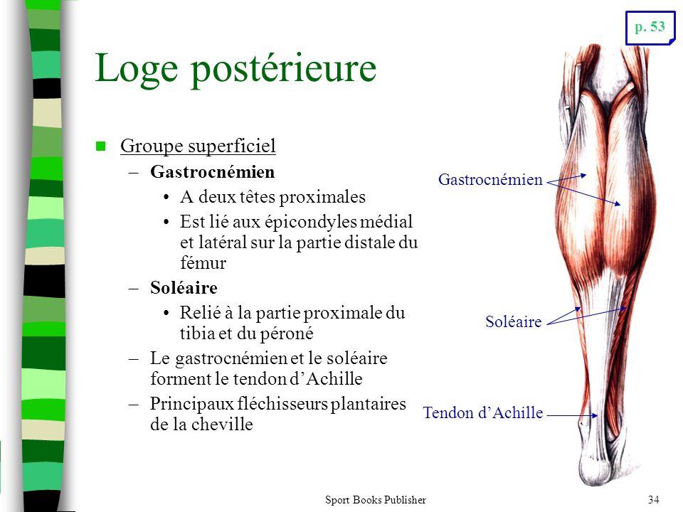 Loge postérieure Groupe superficiel Gastrocnémien