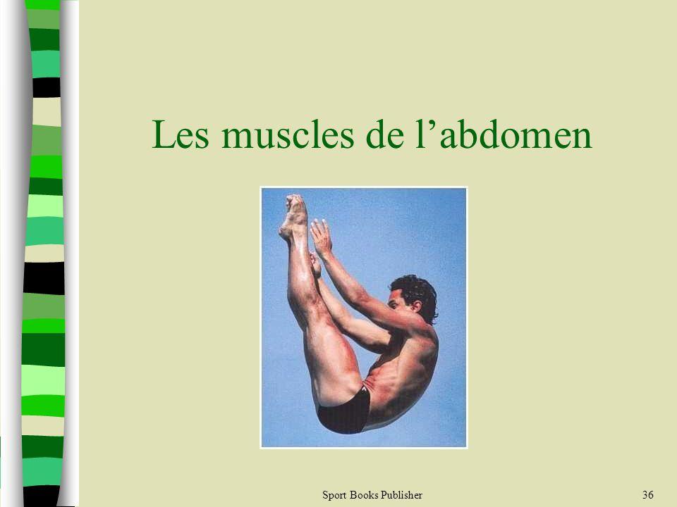 Les muscles de l'abdomen