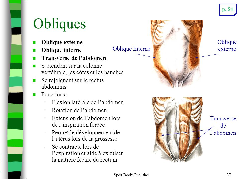 Transverse de l'abdomen