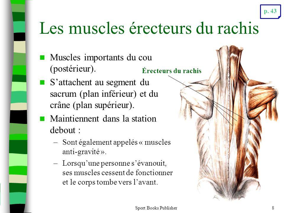 Les muscles érecteurs du rachis