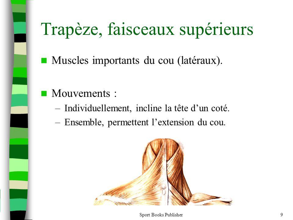 Trapèze, faisceaux supérieurs