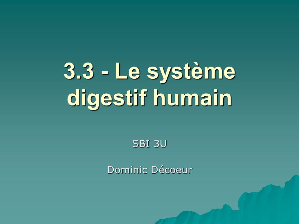 3.3 - Le système digestif humain