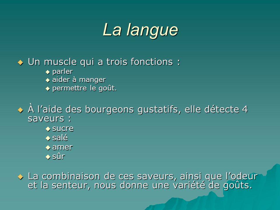 La langue Un muscle qui a trois fonctions :