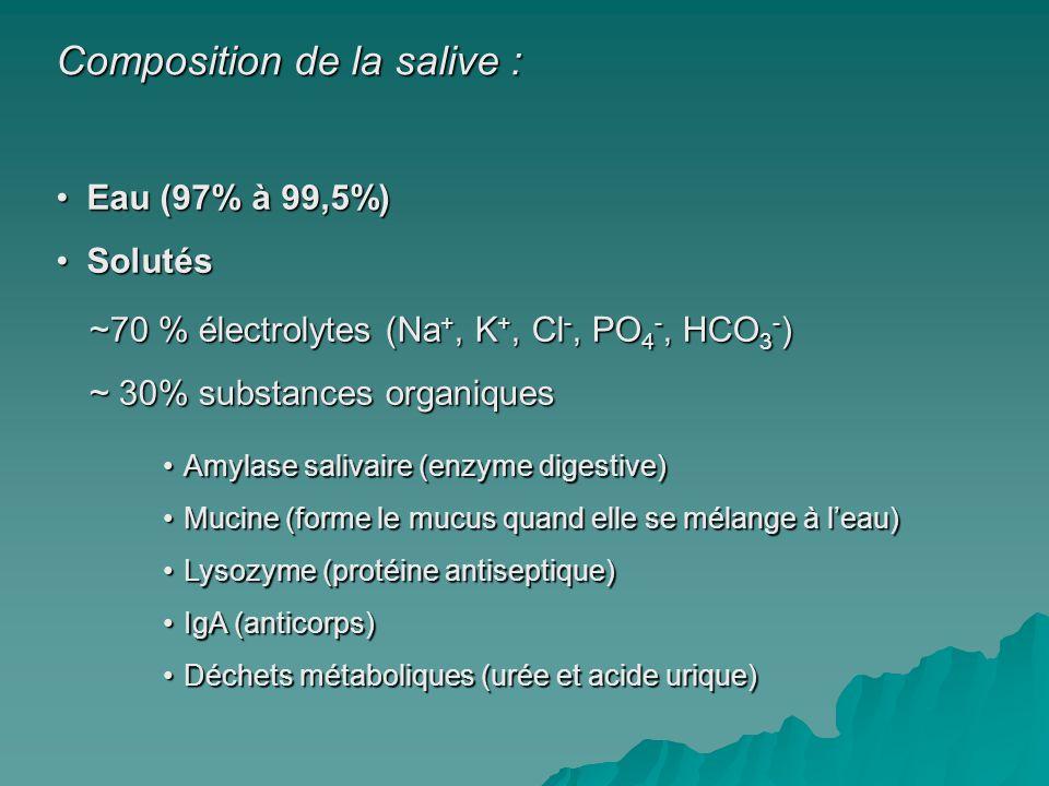 Composition de la salive :
