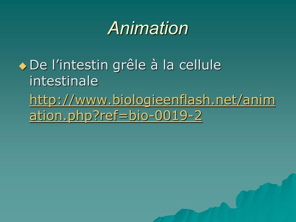 Animation De l'intestin grêle à la cellule intestinale