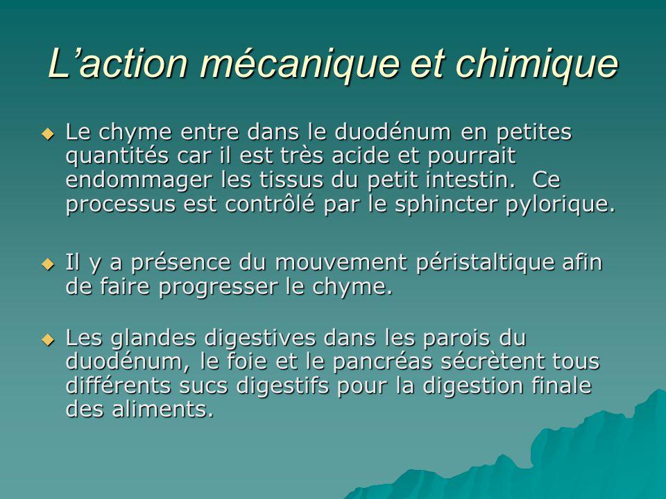 L'action mécanique et chimique