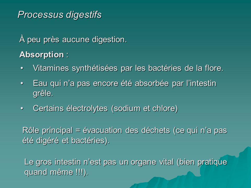Processus digestifs À peu près aucune digestion. Absorption :