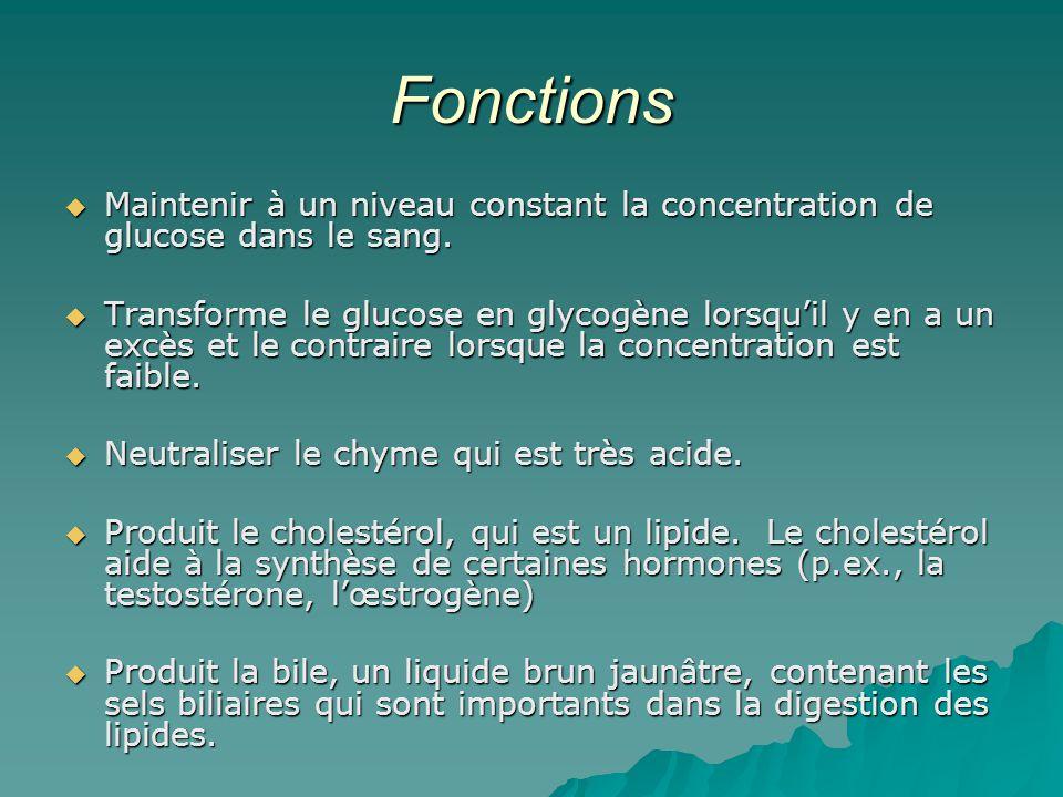Fonctions Maintenir à un niveau constant la concentration de glucose dans le sang.