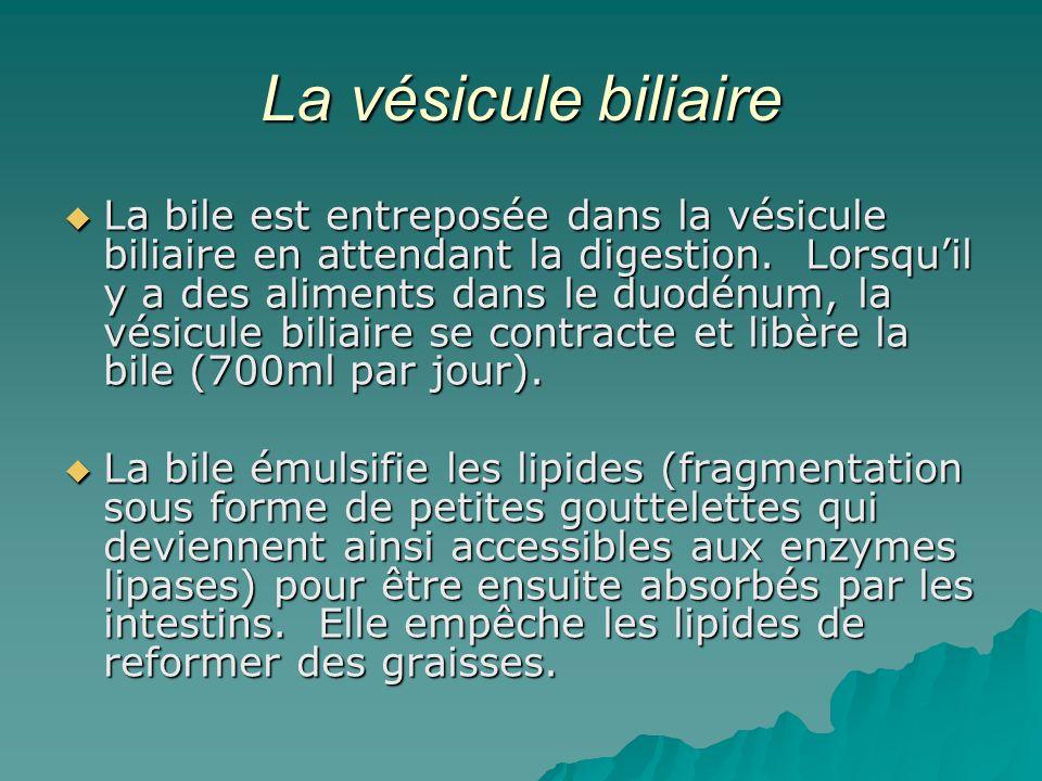 La vésicule biliaire