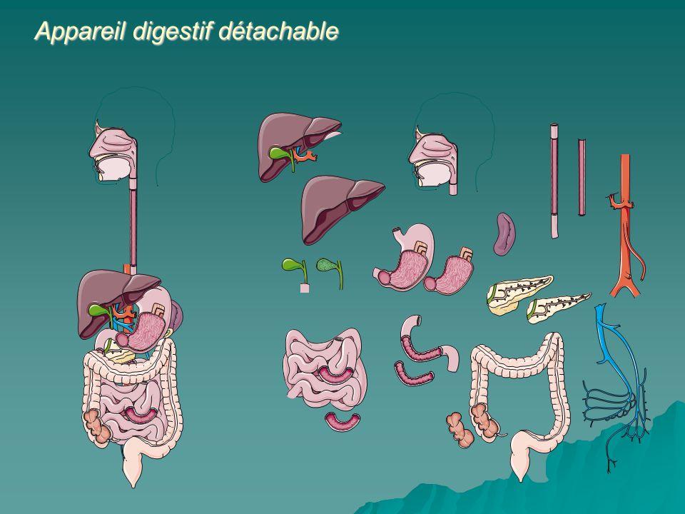 Appareil digestif détachable