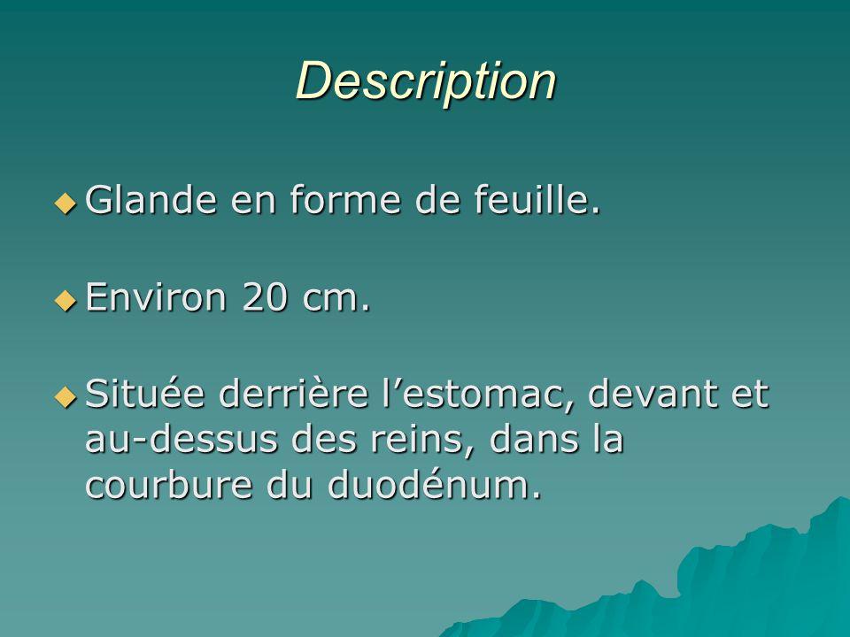 Description Glande en forme de feuille. Environ 20 cm.