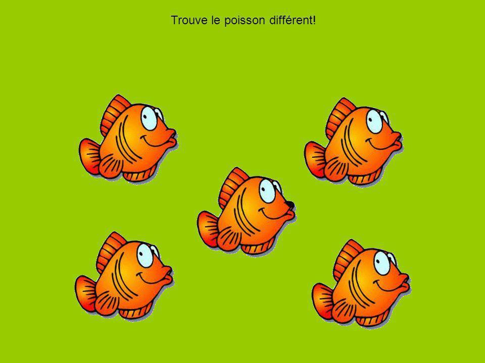 Trouve le poisson différent!