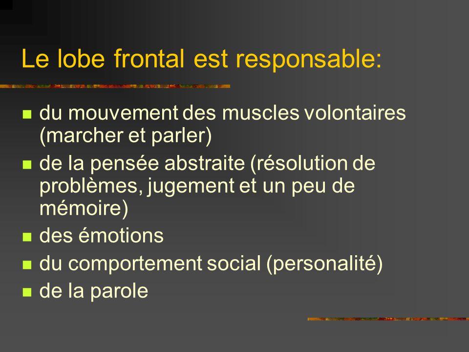 Le lobe frontal est responsable: