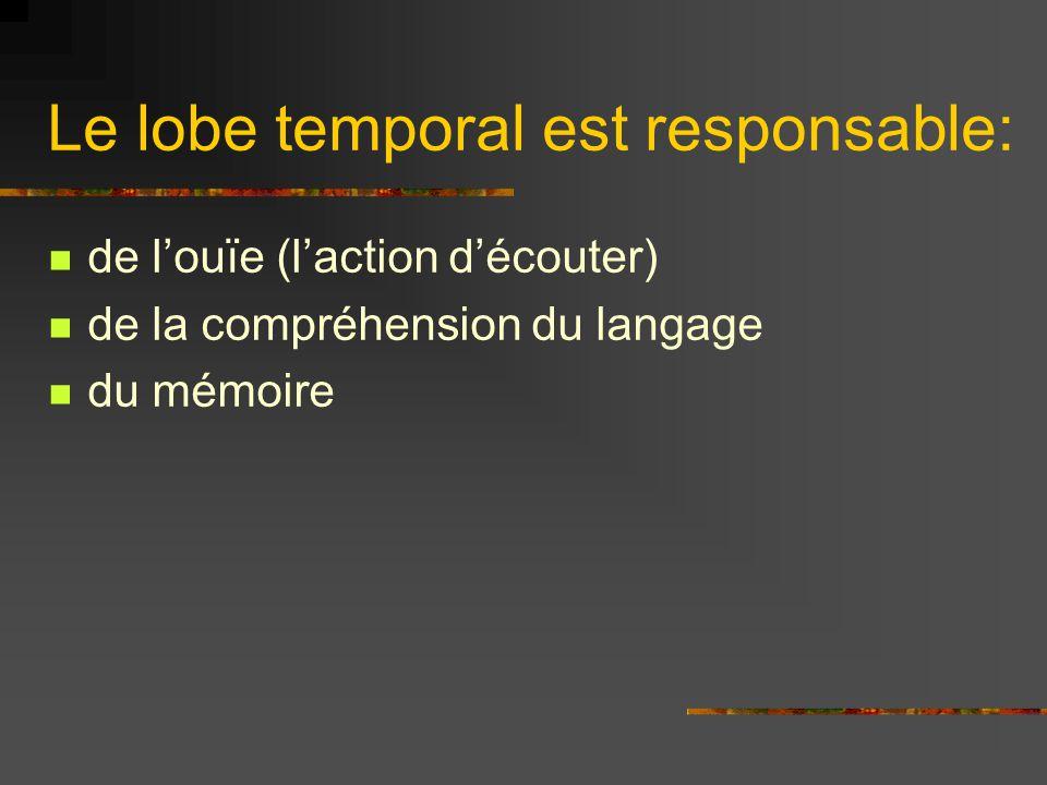 Le lobe temporal est responsable:
